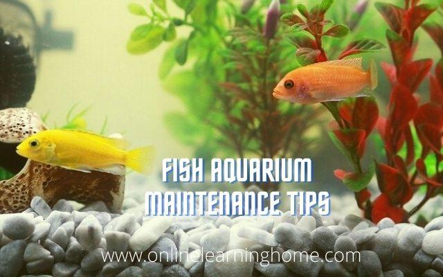 Fish Aquarium maintenance tips