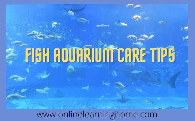 fish aquarium care tips